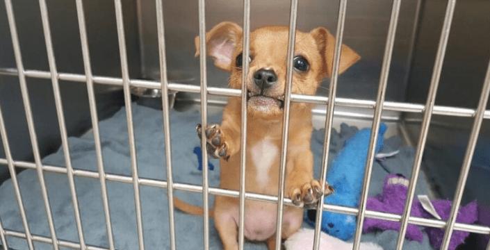 Crazy reason puppy is in 'jail'