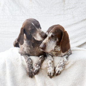 Bonded senior dogs lost home after grand kids lost interest in them • Pet Rescue Report