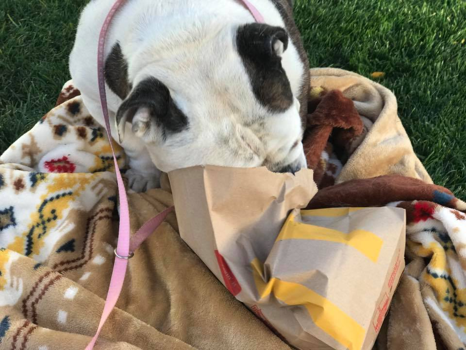Peggy sue had a great last day dumped shelter dogs life mattered but when she needed medical care it was dismissed until peggy sues breathing became so labored her owners didnt want to deal with their dog anymore altavistaventures Images
