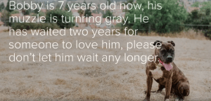 Abandoned dog is losing hope