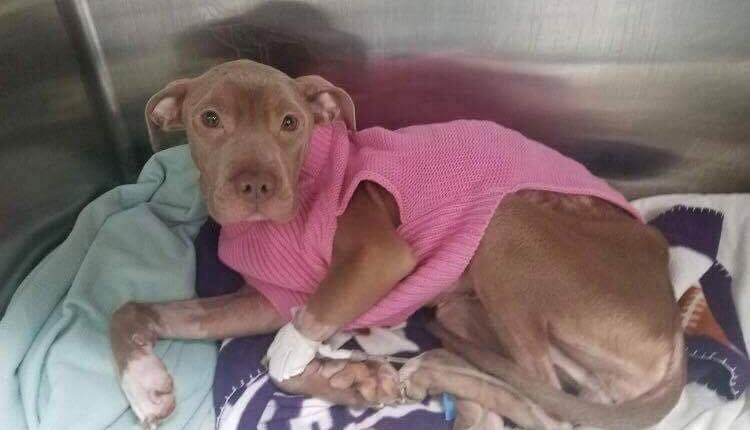 skin and bones dog abandoned