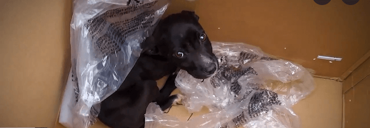 Abandoned puppy dumped on side of road