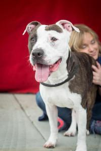 Sweet dog has been at shelter too long