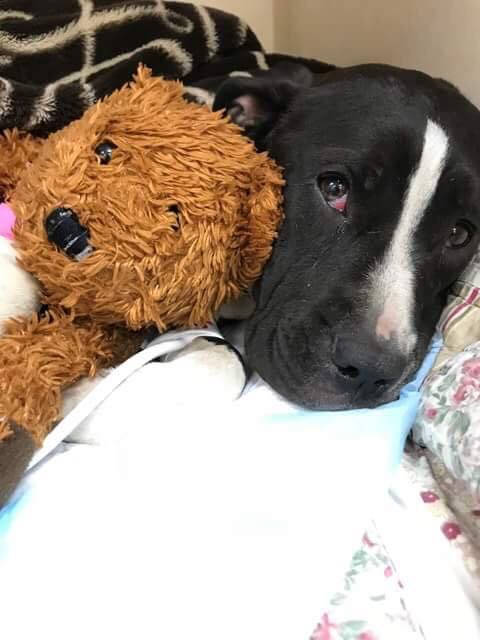 Update about dumped dog