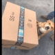 Amazon contractor dropped box on puppy