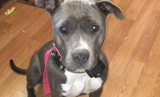 Reward offered after dog found shot and bound