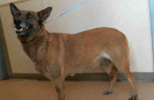 Dog attacks leave zoo animals dead