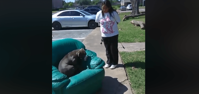 Dog abandoned with chair and trash