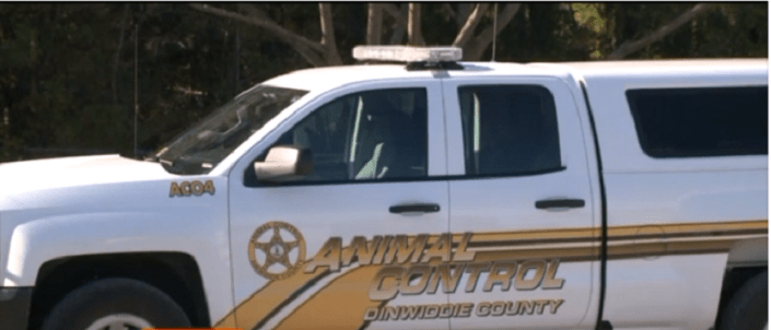 Dogfighting operation discovered in wooded area