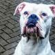 Man heartbroken over dog hanging allegation