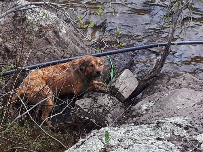 Dog left to die by river
