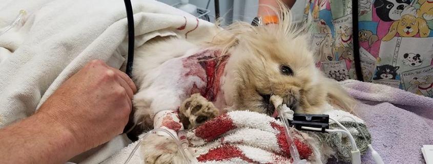 Dog mauled at boarding facility