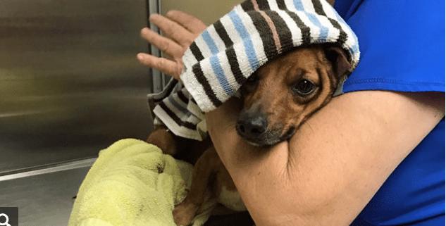 Dog's paw blown off by thrown firecracker