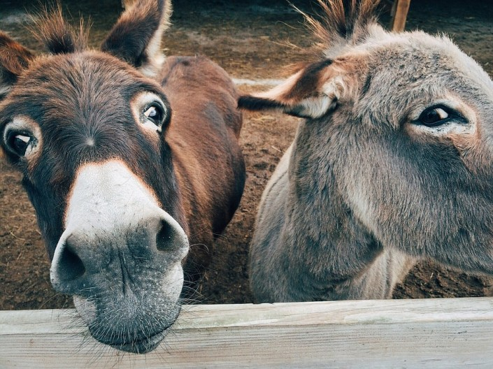 Donkeys killed for Chinese health fad