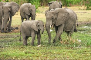 Elephant poachers killed in shootout