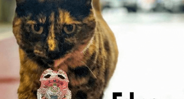 firefighters had to say good-bye to cat