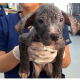 Hairless puppy abandoned