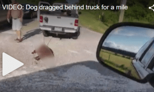 Heartbreaking update about dog dragged behind truck