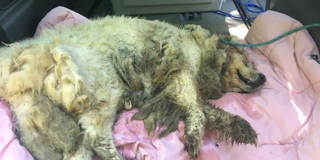 update about neglected dog