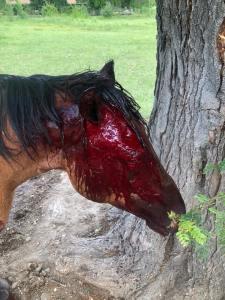 Horse slashing in CA