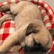 Injured puppy rescued