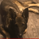 Intruders killed service dog