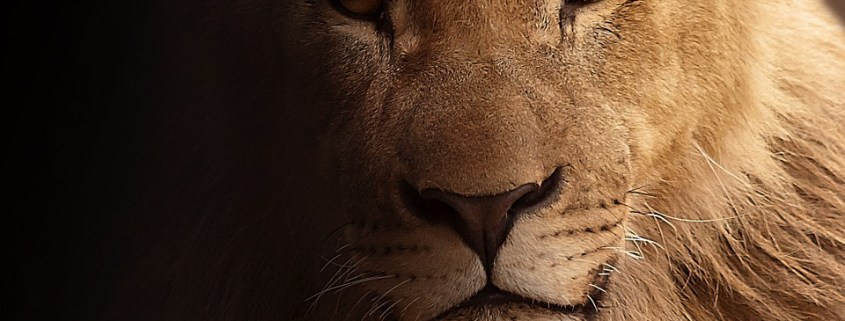 Suspected poacher killed by lions