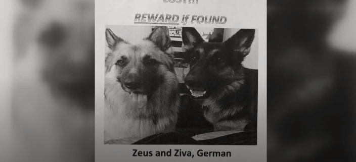 missing dogs found in missile silo