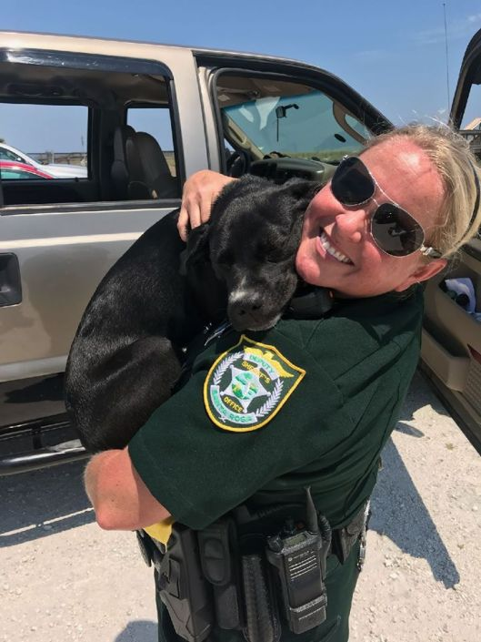 Owner went swimming, dog left in hot truck