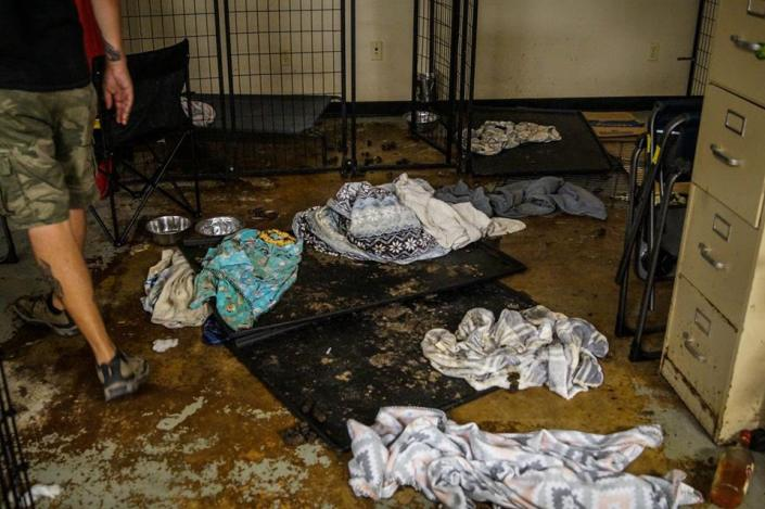 Rescue group shocked by horror found at another rescue group's warehouse