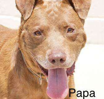 Senior dog at shelter that is beyond full
