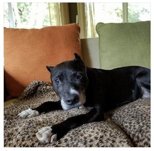 Senior dog suffered years of neglect