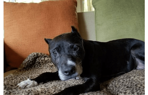 Senior dog suffered years of neglect