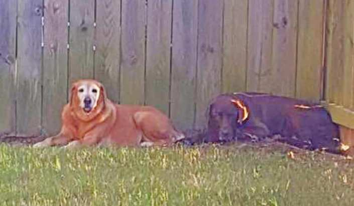 Bonded senior dogs need retirement home together