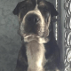 Surrendered puppy on death row