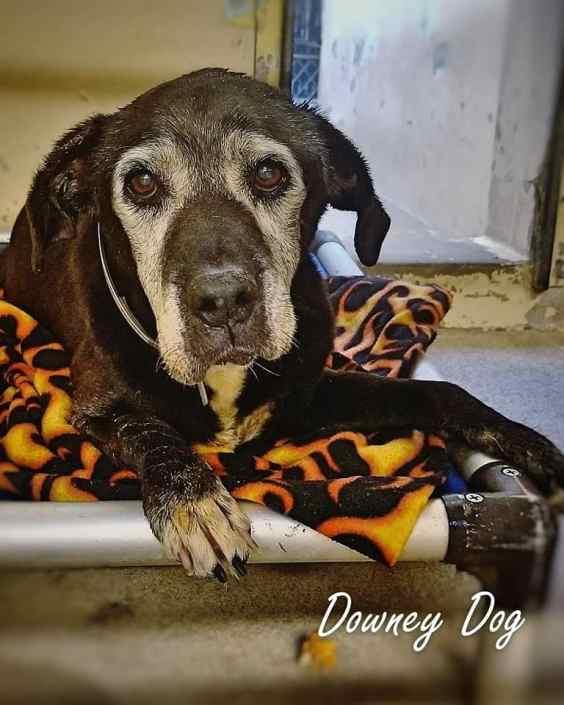 Surrendered senior dog at busy shelter
