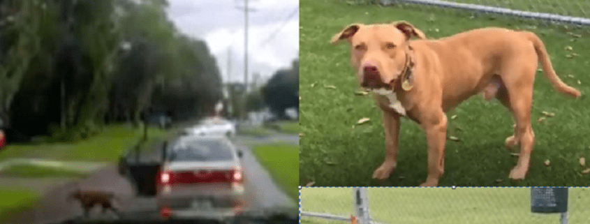 Update after dog dumped from car