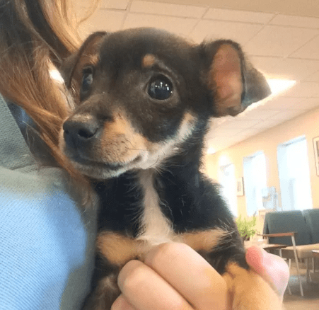 Woman lied about puppy being fatally kicked