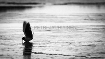 petri-jauhiainen_valokuvaaja_valokuvaus_kuopio_pohjois-savo_fotographer_fotography_vehmersalmi-kuopio_100504-24