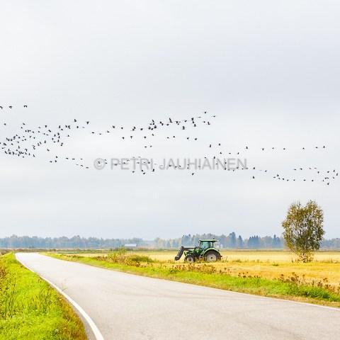 Maaseutu valokuvaaja Petri Jauhiainen
