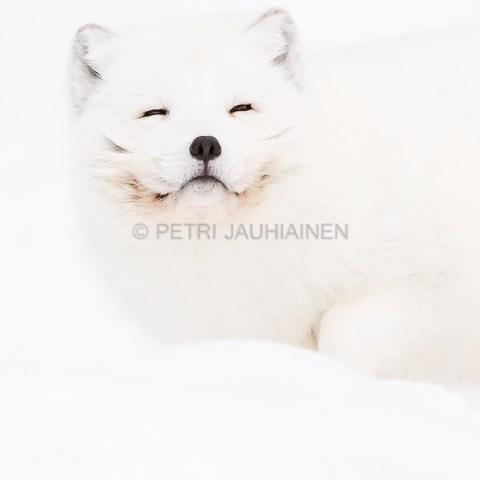 Naali valokuvaaja Petri Jauhiainen