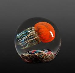 Satava-Pacific-Coast-Jellyfish-Side-Swimmer