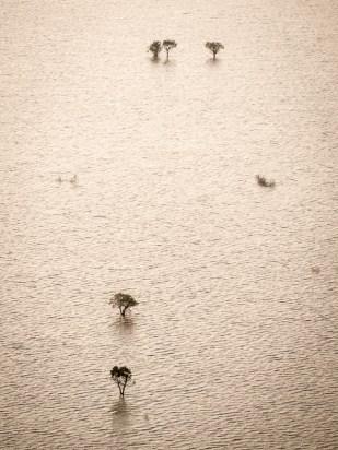 Zaplavené stromy
