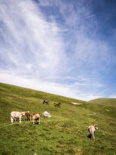 Horská pastvina cestou ze sedla Nakle