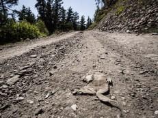 Přejetá žába, symbol tušetských cest