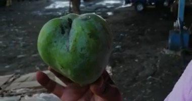 """Photo of """"هياتم"""" مانجا جديدة فى السوق المصرى بـ10 جنيه الكيلو ..فيديو"""