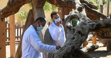 تعرف على مستجدات أعمال مشروع تطوير شجرة مريم والمنطقة المحيطة بها.. صور