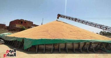 واردات القمح تتراجع إلى 78.9 مليون دولار في يوليو الماضي