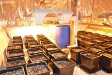 Narkotyki Plantacja (2)