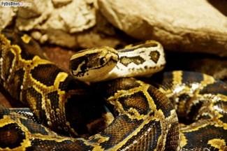 Węże (12)